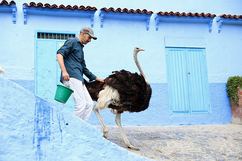 Taking the ostrich for a walk...