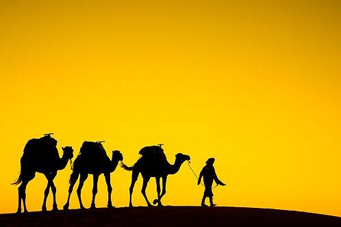 Sahara Camel Train