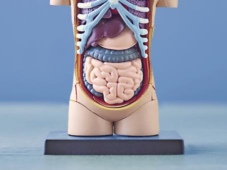 O papel do microbioma intestinal na saúde