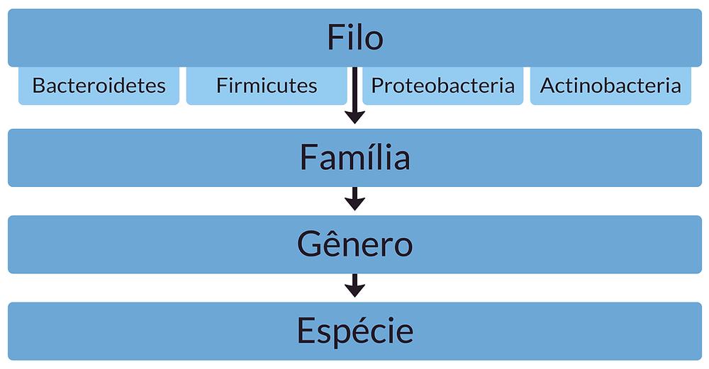 taxonomia das bactérias