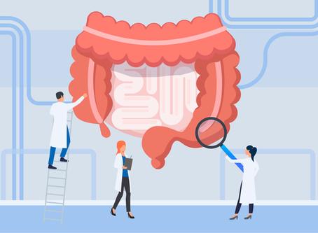 A importância do estudo da microbiota intestinal