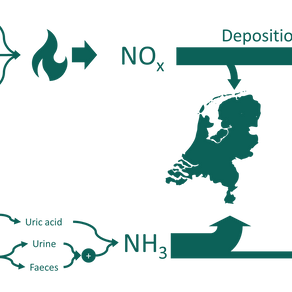 The Dutch Nitrogen Crisis