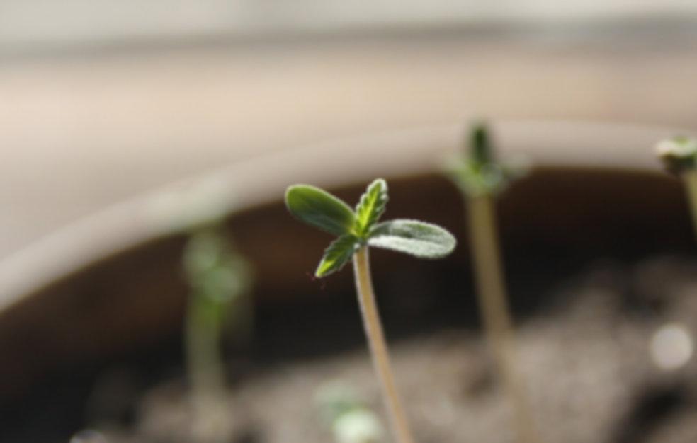 seedling-1062906_1920.jpg