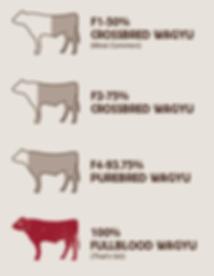 kobe beef vs wagyu beef 3.png