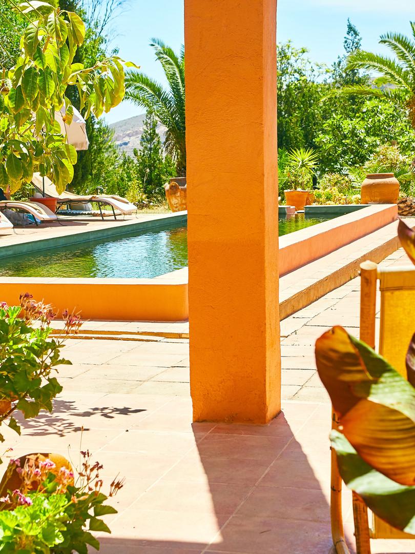 pool-and-palm.jpg