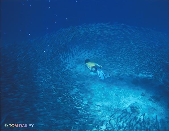 Free Diver. Bonaire.
