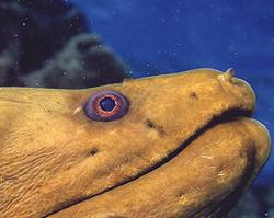 Eel close up