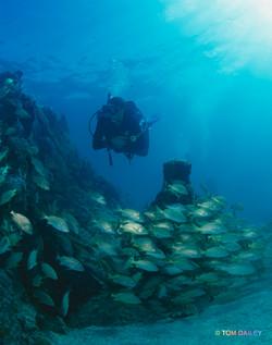 Tech Diver. Key Largo