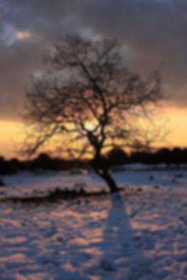 Arbre au coucher du soleil dans un paysage hivernal.