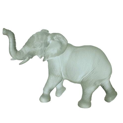 Young Quanza Elephant Ice