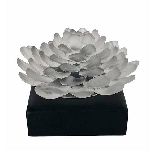 Lillies of Pera