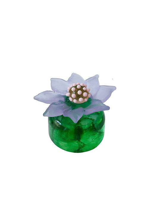 Lilac  Cactus Flower