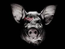 pigs cover art.jpg