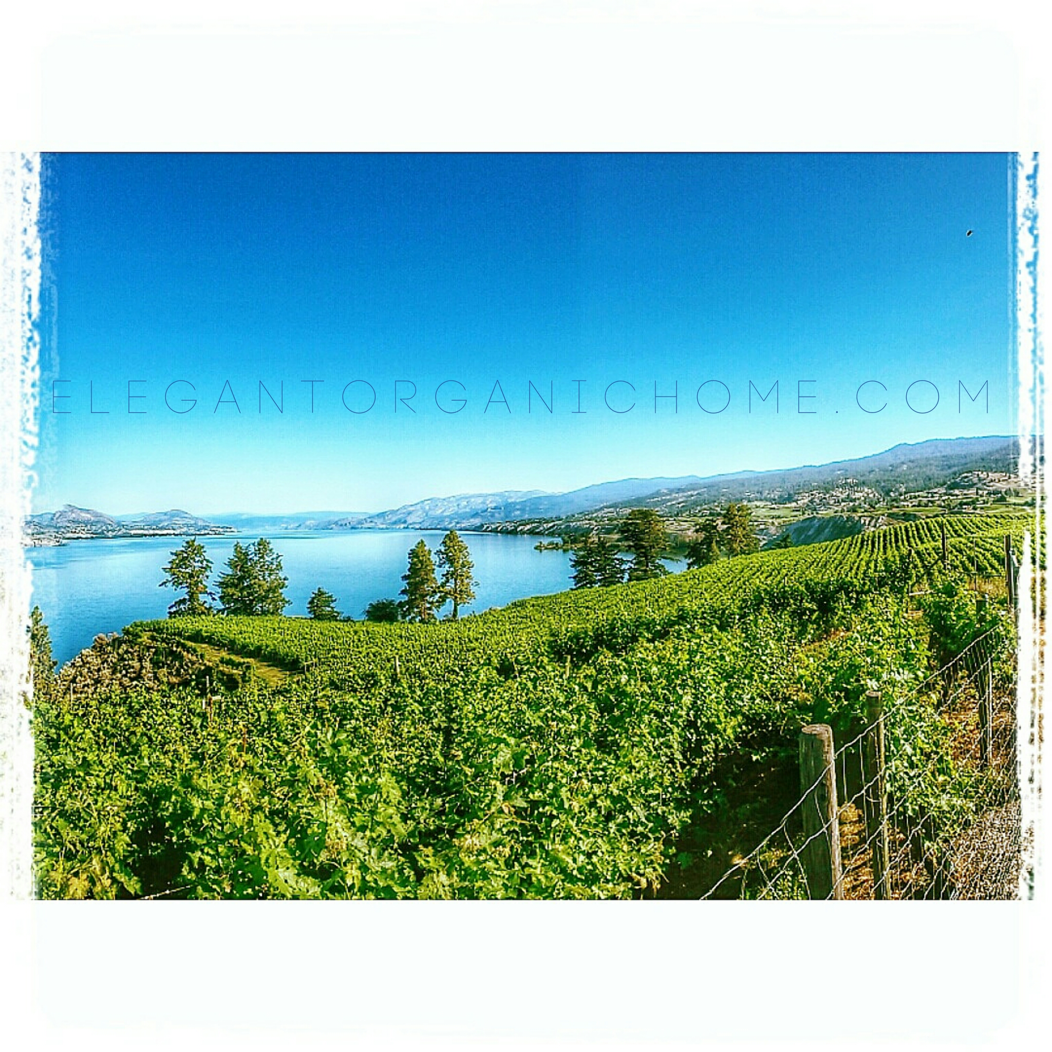 Okanagan Wine Country Real Estate