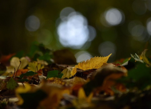 Autumn leaf or two
