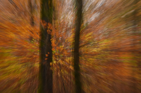 Movement in the trees
