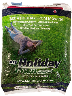 Jacklin My Holiday Lawn (100% Kentucky Bluegrass)