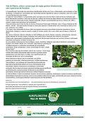 Bananeira Agrofloresta