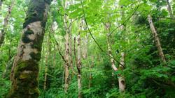 Yoga hike day glanleam subtropical