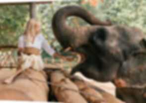 elephant-sanctuary.jpg