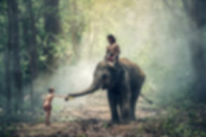 elephant-1822481_1920.jpg