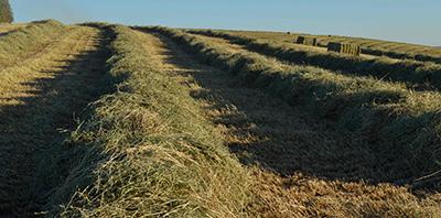 2014-Hay-Rows