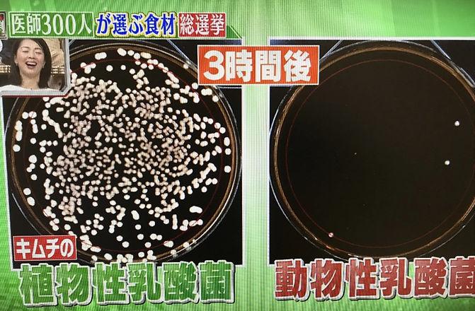 乳酸菌比較.jpg
