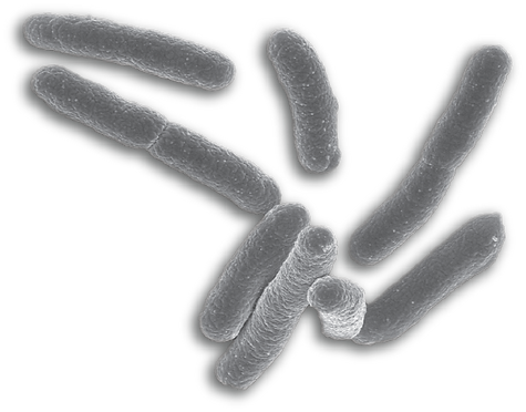 bacteria_PNG45.png