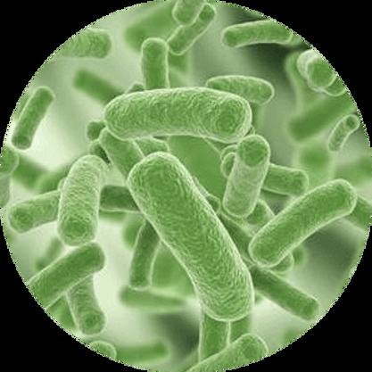 bacteria_PNG54.png