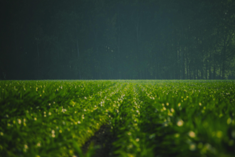 Green%20Field_edited.jpg
