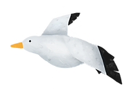 Seagull_edited.png