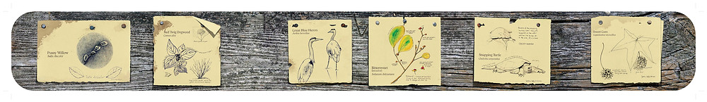 Sketchbook drawings for RWP Zoo trail