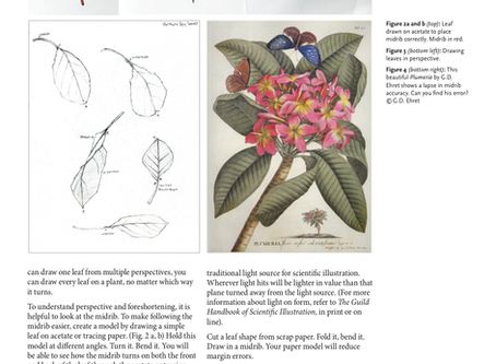 Leaves: what they are, how they work, ways to draw