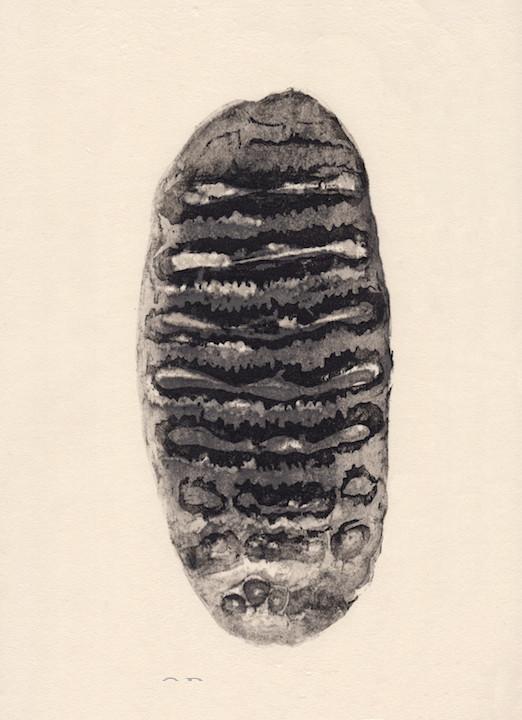 Woodblock print-fossil mastodon tooth