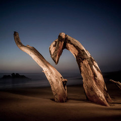 Landscape Photography: Tree Stumps