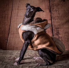 Pet Portraits: Picolo the Dog