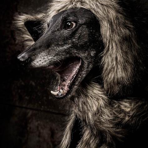 Debbie Pet Portrait