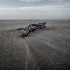 Nature Photography: Seascape with Driftwood