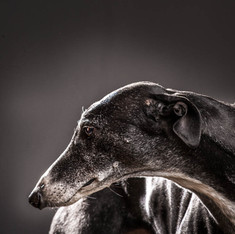 Pet Photography: Sasha Dog