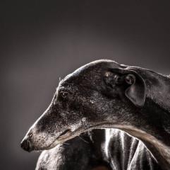 Pet Photography: Sasha Dog