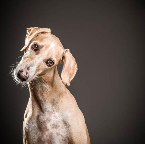Neo Dog Portrait