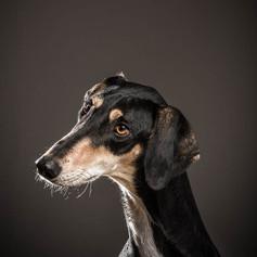 Keiko Dog Photography