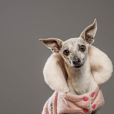 Pet Photography: Penny Pincher Dog