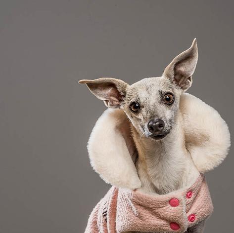 Penny Pincher Dog Portrait