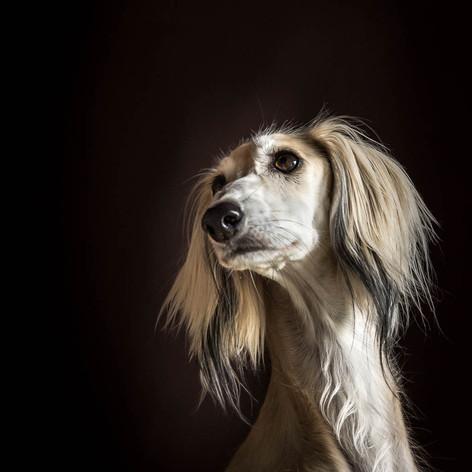 Aliya Dog Portrait