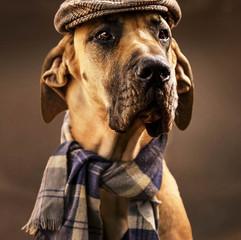 Pet Photography: Benjamin the Dog