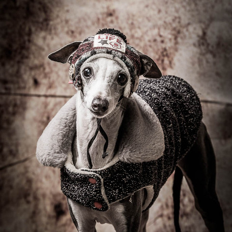 Paparazzi Dog Portrait