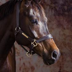 Pet Photography: Horse Portrait
