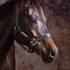 Awadi the Horse
