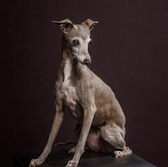 Pet Photography: Sassy Dog